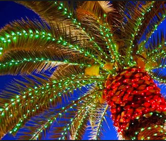 the tops of palm trees lit along the myrtle beach boardwalk adding bows and christmas garlands